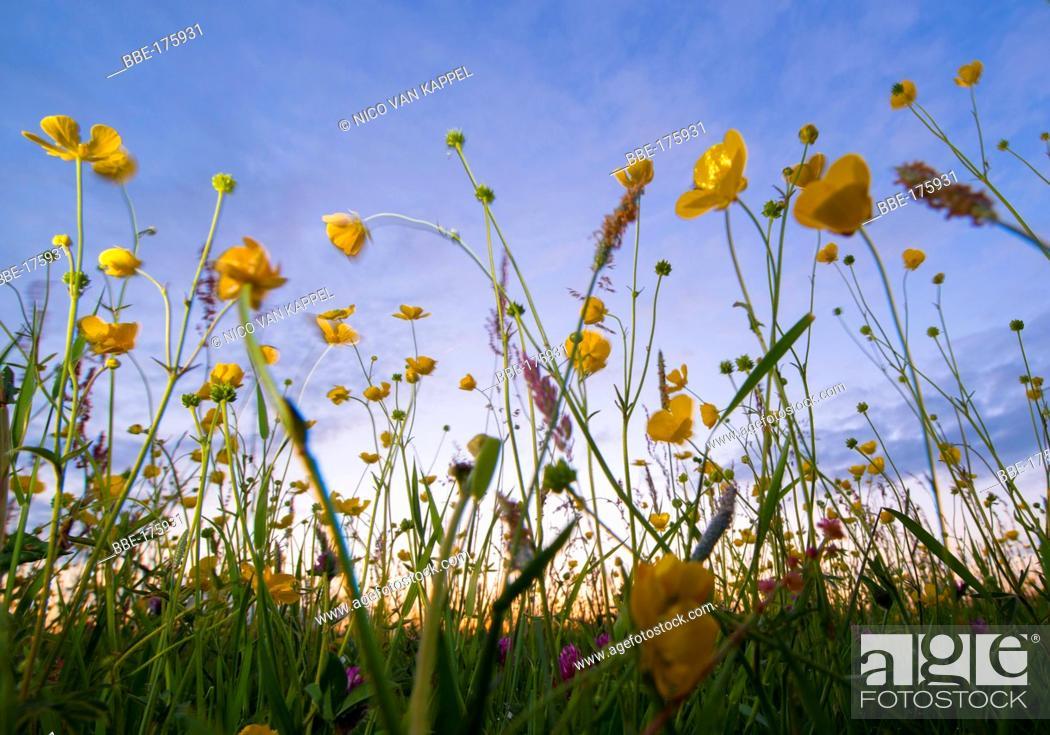 Stock Photo: Grassland naturereserve Waalhoek at sunset,.