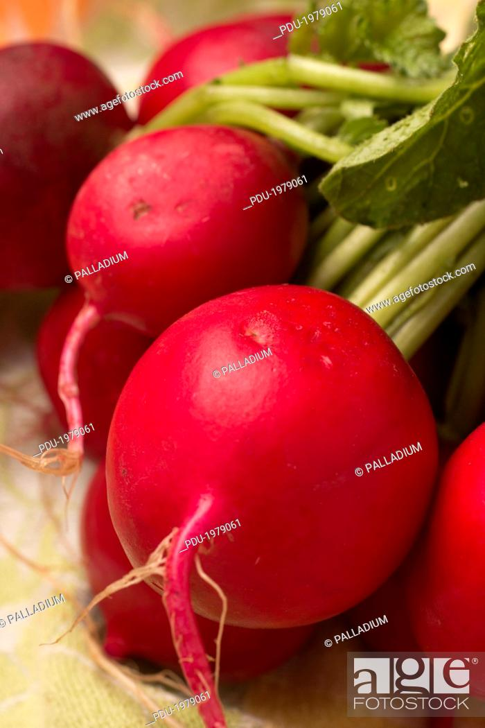 Stock Photo: A bunch of fresh radishes.