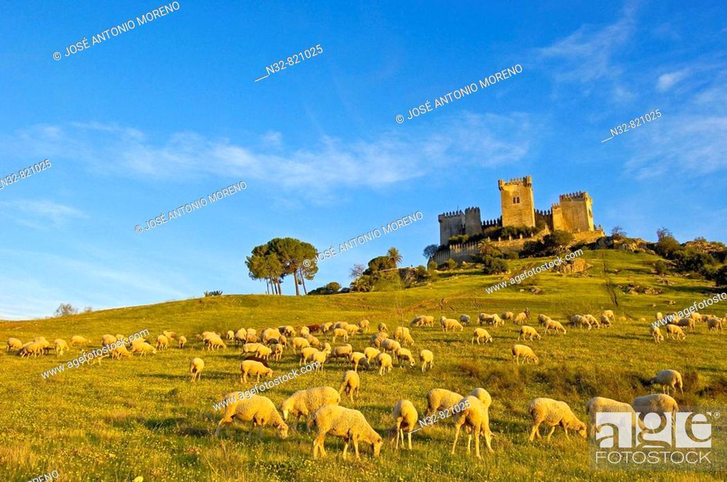 Stock Photo: Castle of Almodóvar del Río Córdoba province, Andalusia Spain.