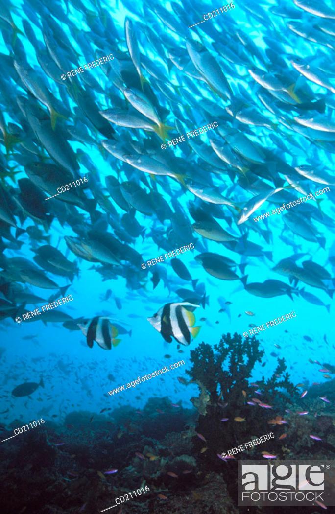 Stock Photo: Prolific marine life. Papua New Guinea.