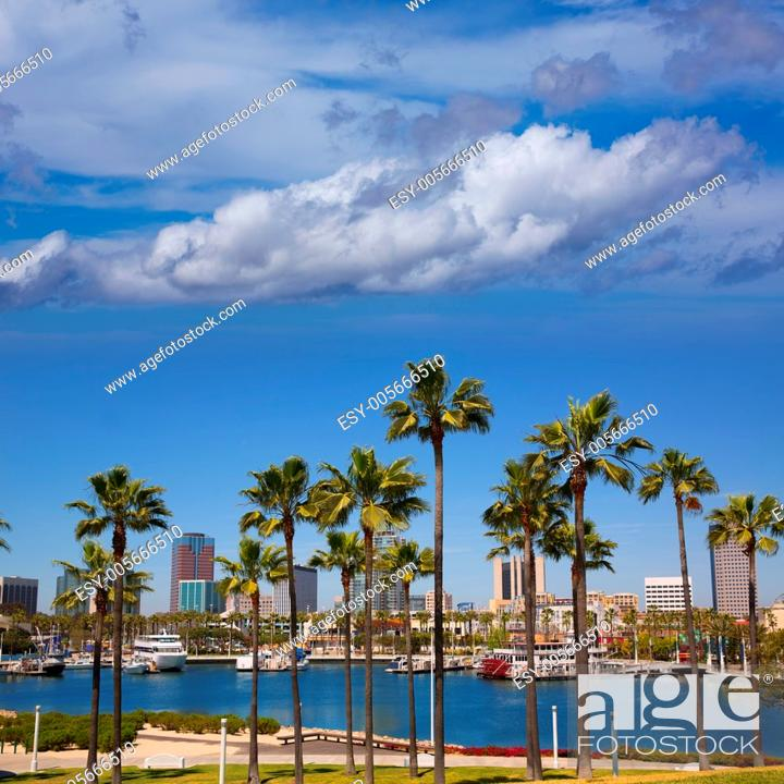 Imagen: Long Beach California skyline with palm trees from marina port USA.
