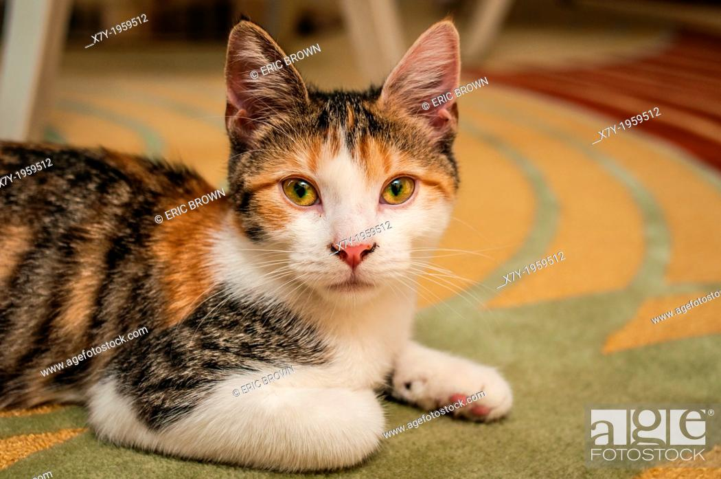 Stock Photo: A cat on a rug.
