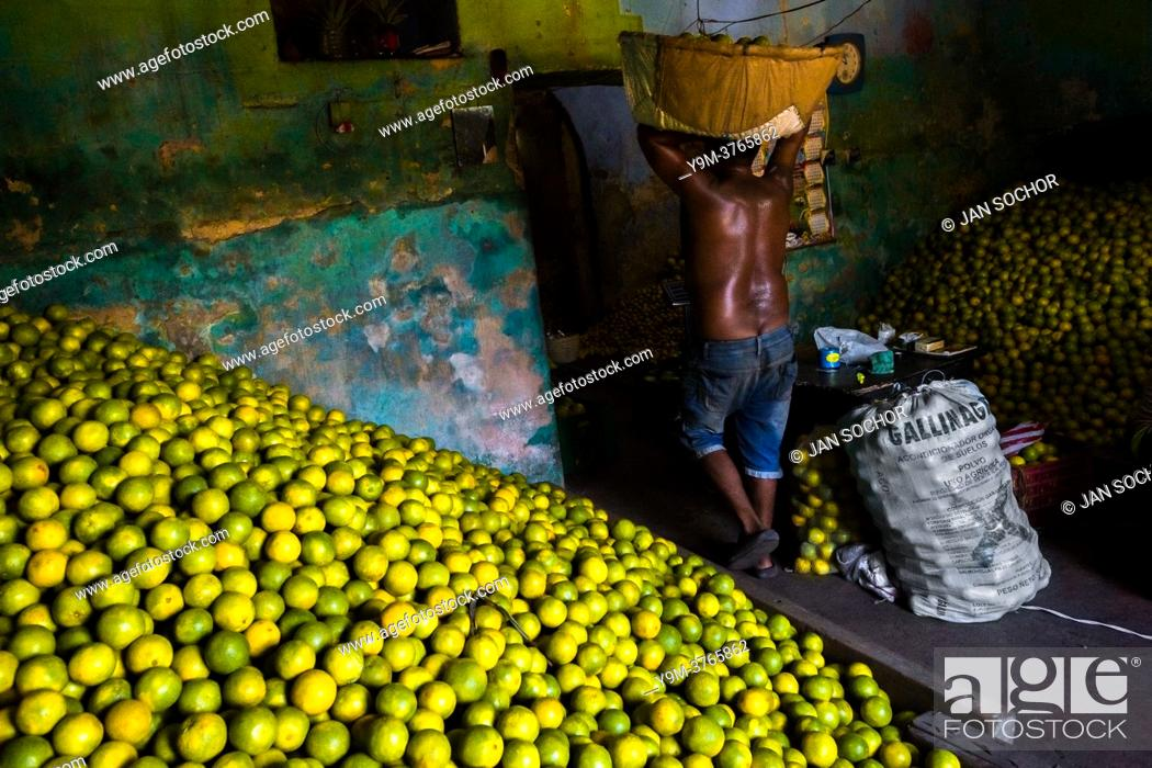 Stock Photo: An Afro-Colombian worker carries a basket loaded with green oranges (for juicing) into a storage room of the fruit market in Barranquilla, Colombia.