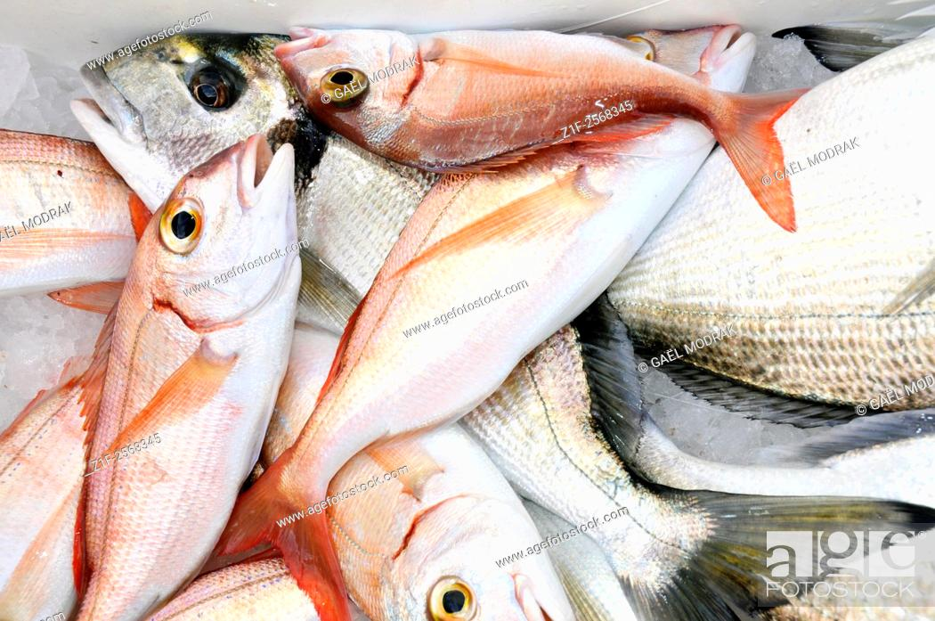 Stock Photo: Sea breams fished in Marseille. Sparus aurata and Pagellus bogaraveo.