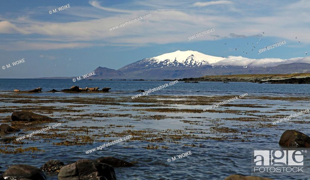Stock Photo: Ytri-Tunga, resting place for gray seals, Iceland, Snaefellsnes.