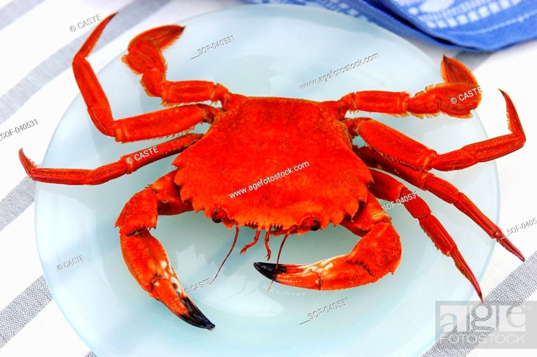 Stock Photo: etrille crab.