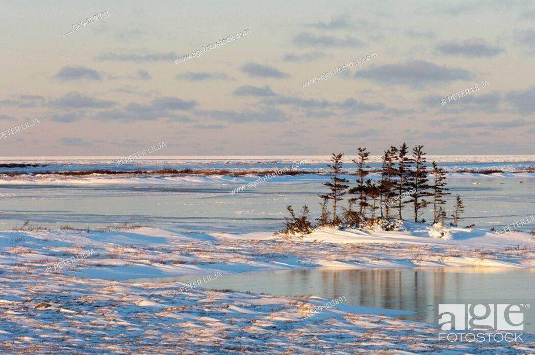 Stock Photo: The tundra landscape near Churchill, Canada (November 2005).