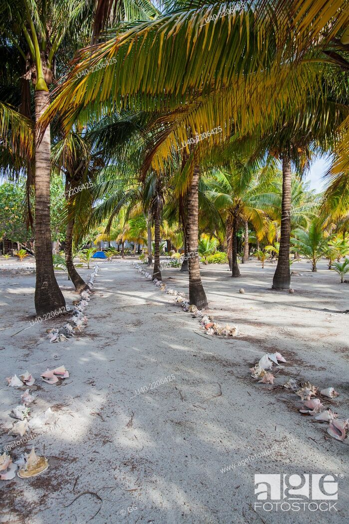 Stock Photo: Belize, Glovers reef Atoll, Long caye, .