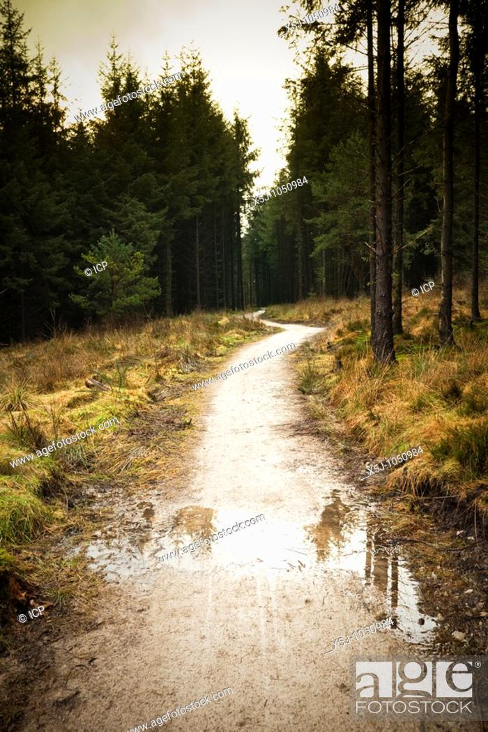 Stock Photo: Coniferous forest path UK.