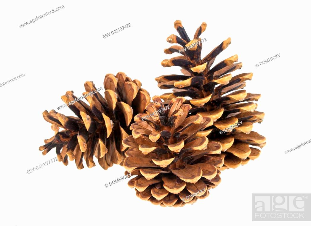 Stock Photo: Group of three pine cones on white background.
