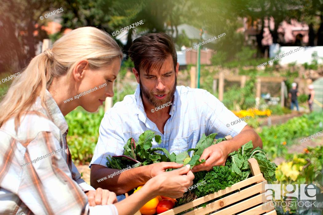 Stock Photo: Mature couple in garden, inspecting freshly picked vegetables.