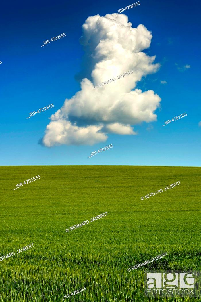 Stock Photo: Green wheat field and a single cloud on blue sky, Puy de Dome, Auvergne Rhône Alpes, France.