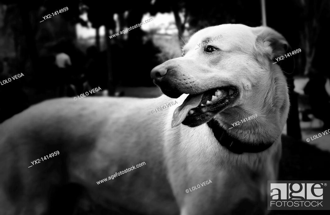 Stock Photo: Portrait of black and white dog.