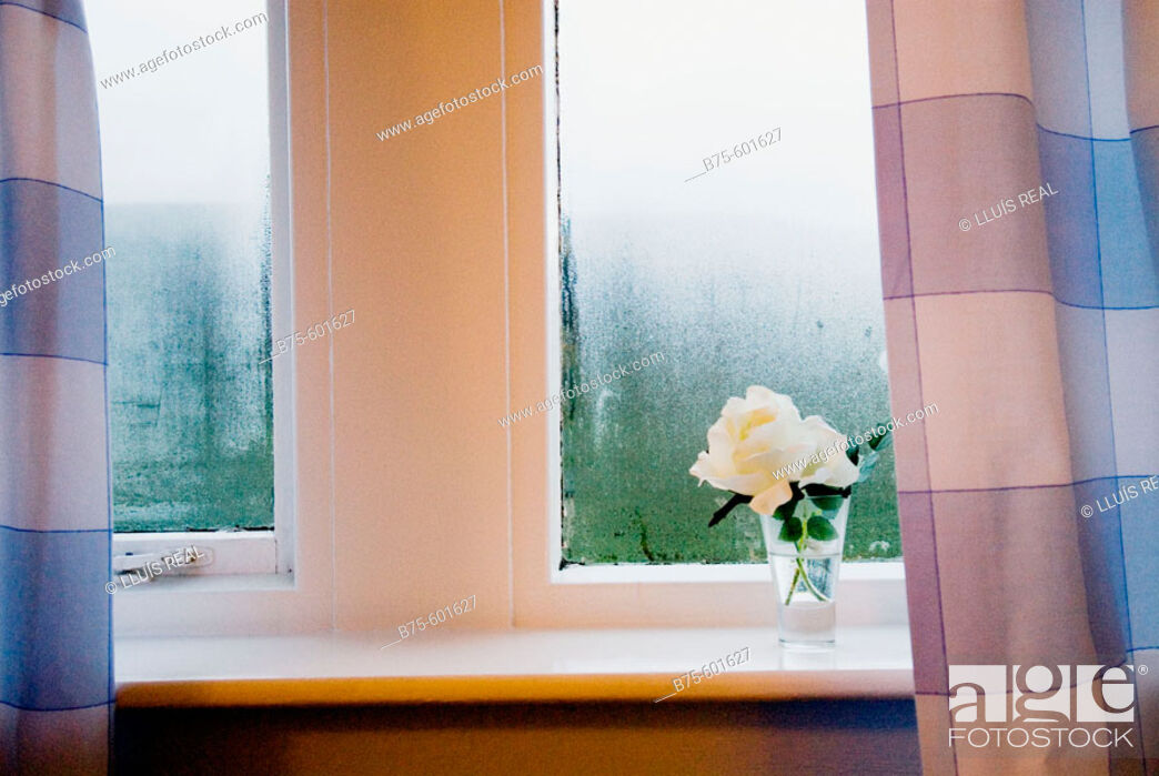 Stock Photo: Window detail flower.