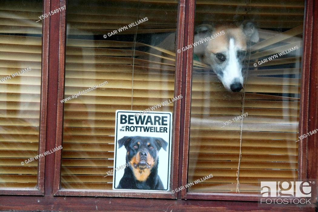 Stock Photo: beware rottweiler dog sign notice in house home property window.
