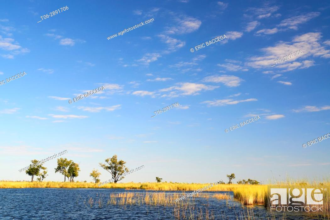 Stock Photo: Landscape with water channel and high grass, Moremi National Park, Okavango Delta, Botswana, Southern Africa.