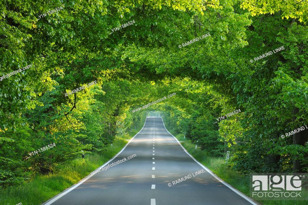 Photo de stock: Tree-lined country road, Germany, Mecklenburg-Vorpommern, Island of Ruegen.