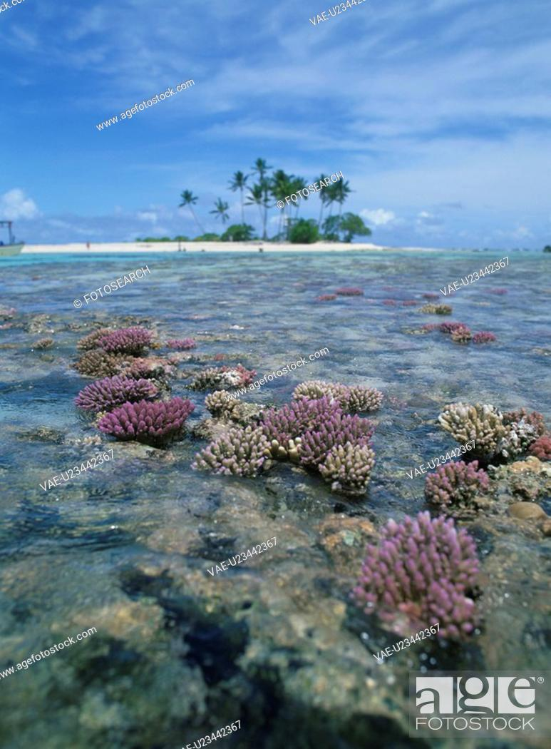 Stock Photo: The Coral Reef Of Ebb Tide.
