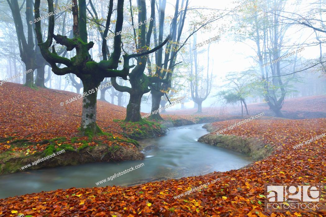 Stock Photo: Beech forest, Gorbeia Natural Park, Alava-Bizkaia, Basque Country, Spain, Europe.