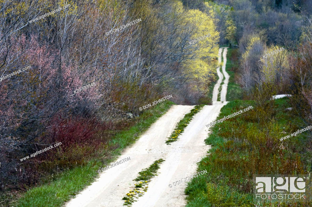 Stock Photo: Country road with dandelions. Manitoulin Is., Ontario, Canada.