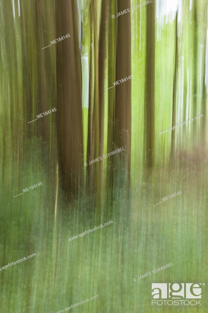 Imagen: Abstract of blurred trees in green forest.