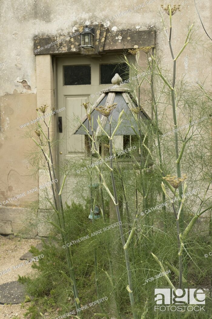 Stock Photo: Mellow teal coloured rustic bird house amongst sweet smelling fennel herbs near the kitchen gardens of Frampton Court, the Cotswolds, England.