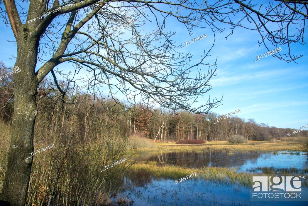 Stock Photo: country side at Reest valley in spring in Overijssel, Holland.