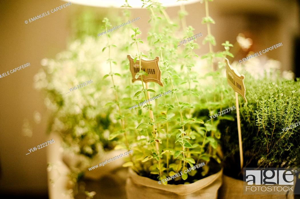 Stock Photo: Pots with herbs, gift for wedding guests.