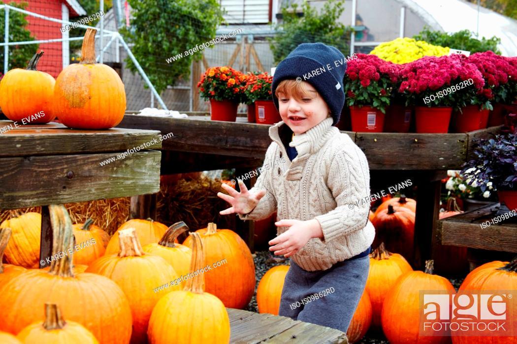 Stock Photo: Boy selecting pumpkin in garden centre.