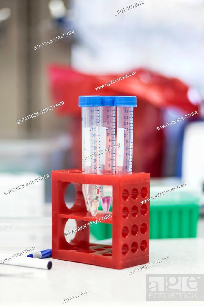 Imagen: Test tubes in red rack on table at laboratory.