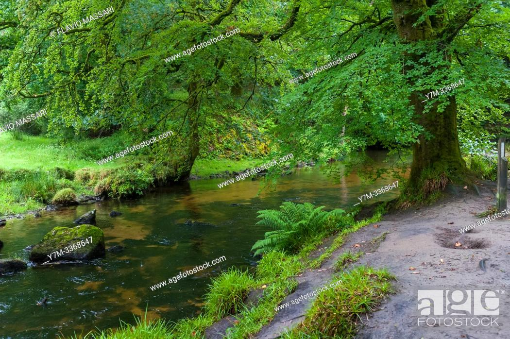 Stock Photo: The Golitha Falls are a series of spectacular cascades and waterfalls along a section of the River Fowey as it makes its way through the ancient oak woodland of.