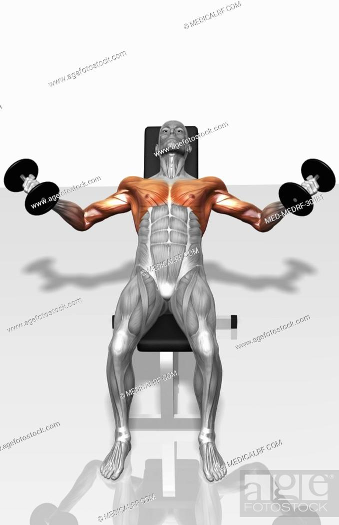 Stock Photo: Dumbbell incline fly exercises Part 2 of 2.