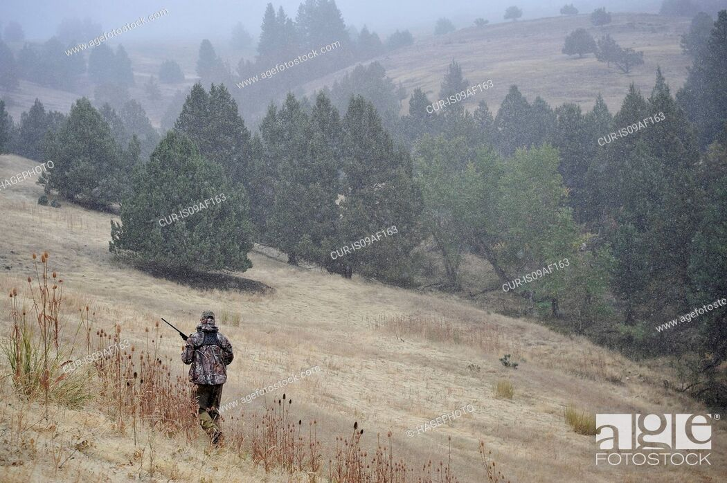 Stock Photo: One deer hunter walking across field, John Day, Oregon, USA.