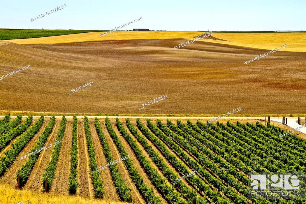 Stock Photo: Vineyards landscape in Rueda, Verdejo grape, Castile and León, Spain.