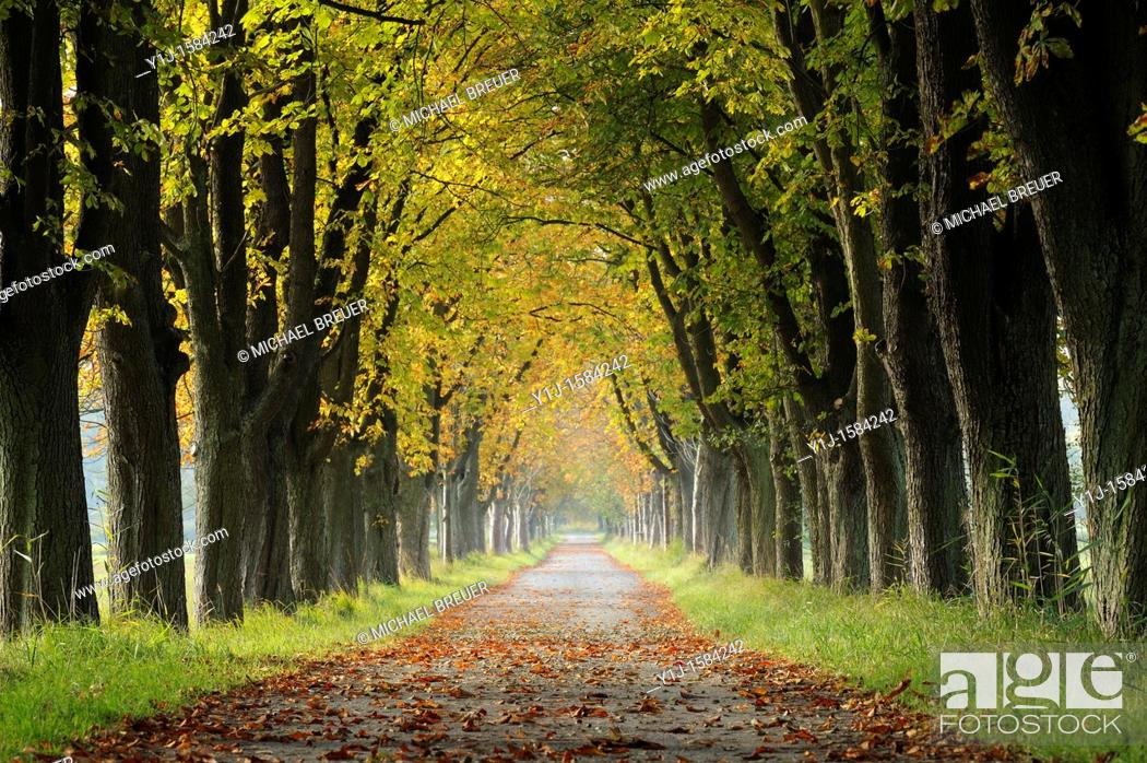 Stock Photo: Alley in Autumn, Hesse, Germany, Europe.