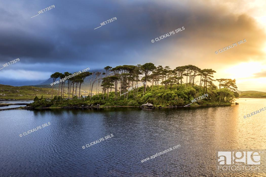 Imagen: Connemara, County Galway, Connacht province, Ireland, Europe. Lough Inagh lake with Pines Island.