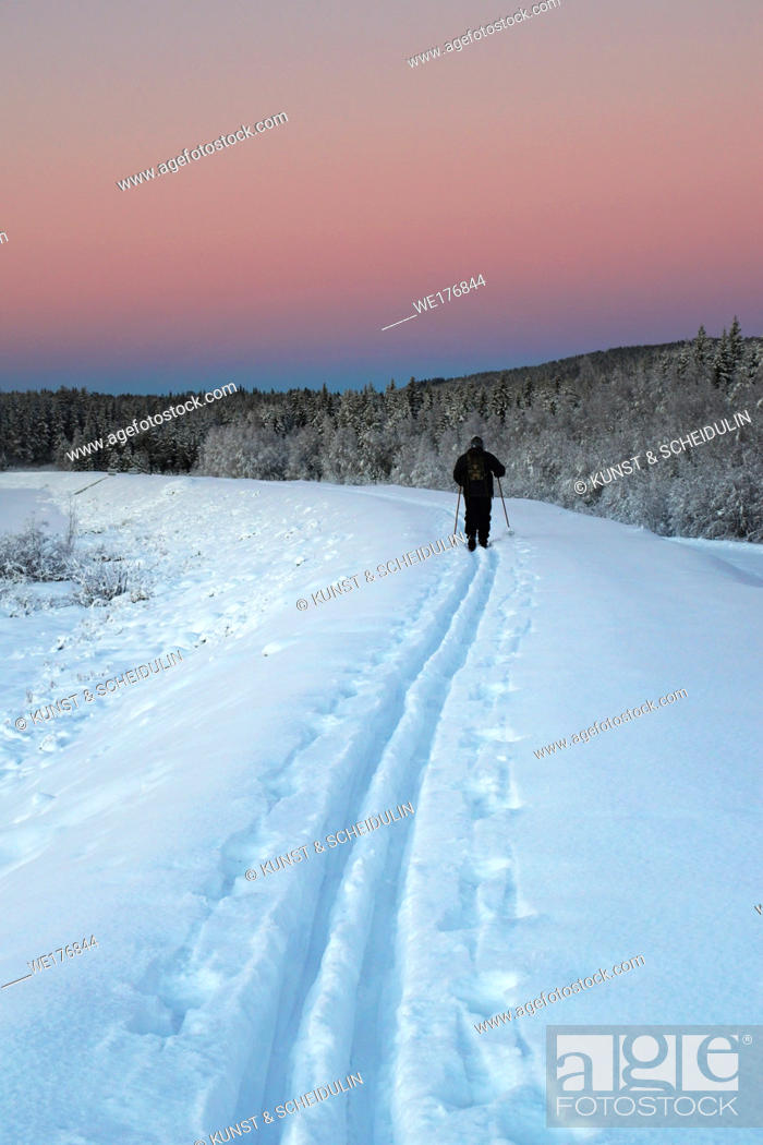 Stock Photo: The tracks of a cross-country skier in the snow are leading into the distance at sunset on a cold winter day in rural Sweden.