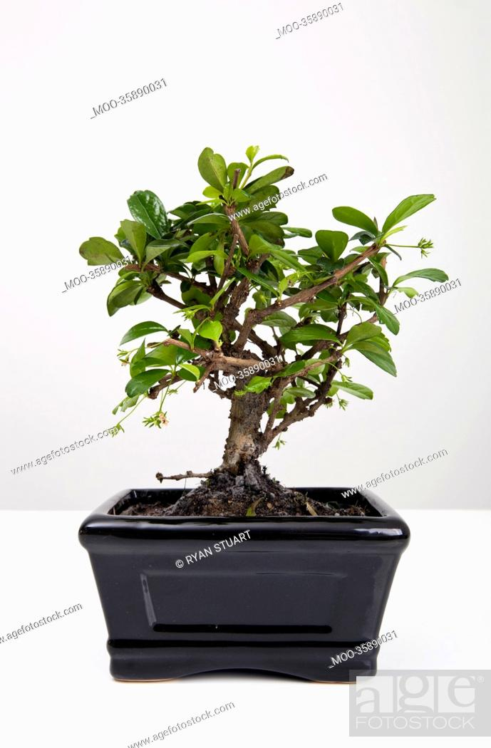 Stock Photo: Potted plant on table against gray background.