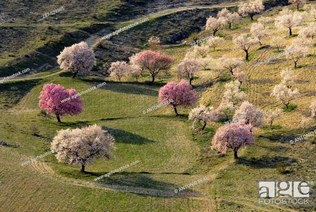 Stock Photo: Fields in Peñas de San Pedro. Albacete. Castilla-La Mancha, Spain.