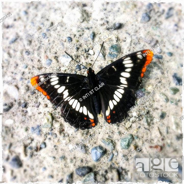 Stock Photo: Close up of butterfly on concrete.