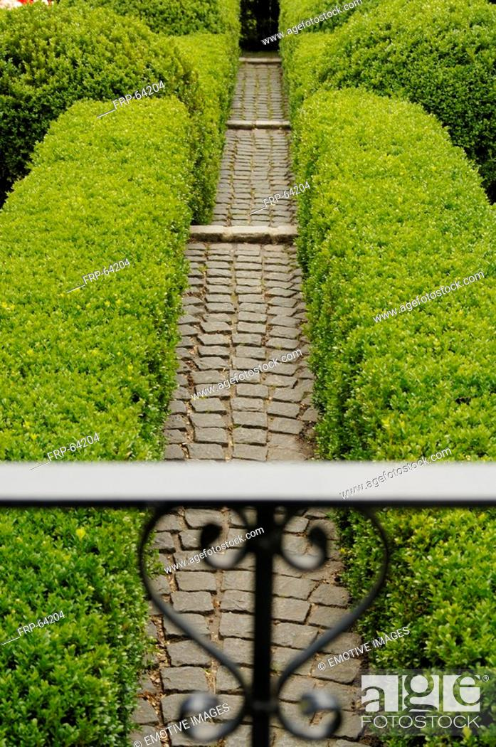 Stock Photo: Garden path with boxwood hedges.
