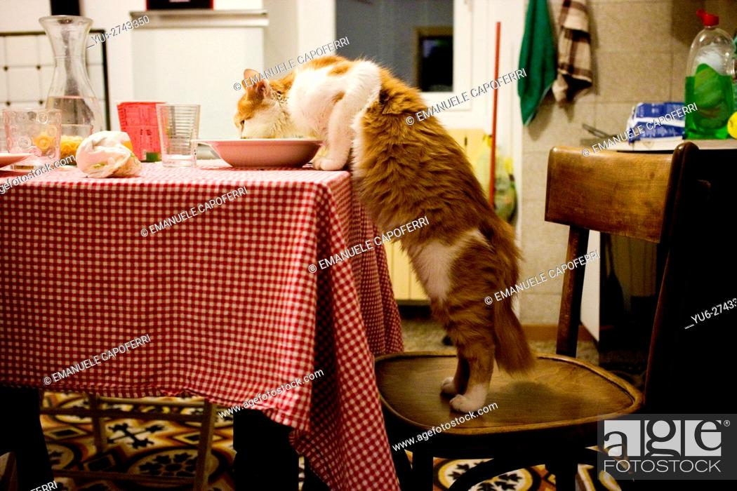 Stock Photo: Cat eating from the plate on the kitchen table.