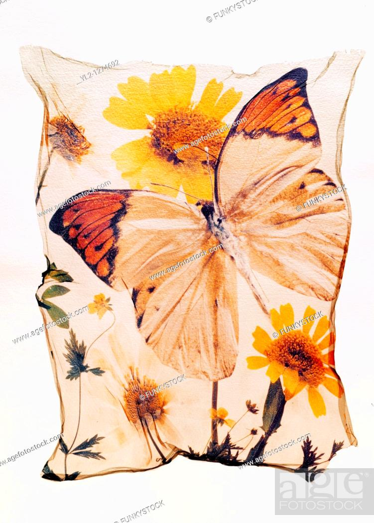 Stock Photo: Orange tipped butterfly with wild flowers - Polaroid lift.
