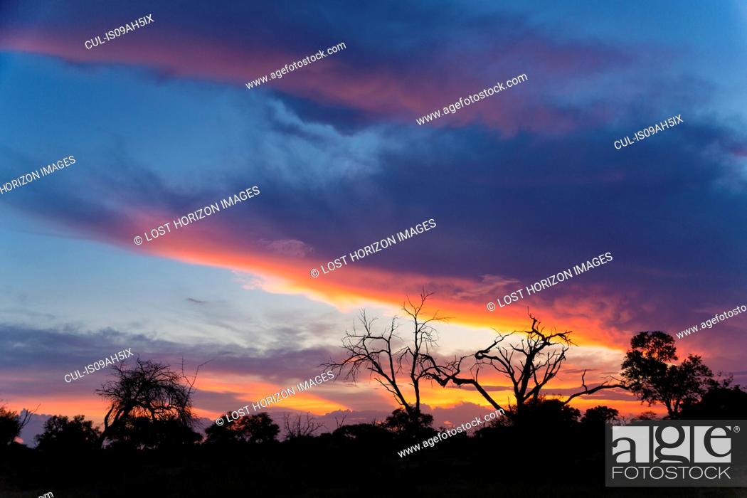 Stock Photo: Silhouetted trees at dusk, Okavango Delta, Chobe National Park, Botswana, Africa.