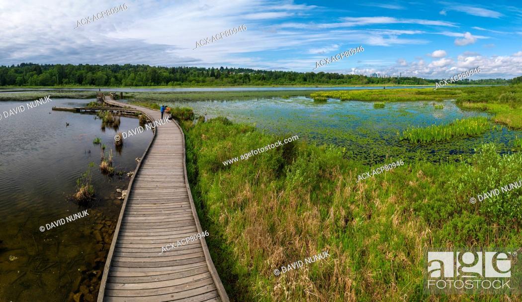 Stock Photo: Burnaby Lake, Vancouver, British Columbia, Canada.