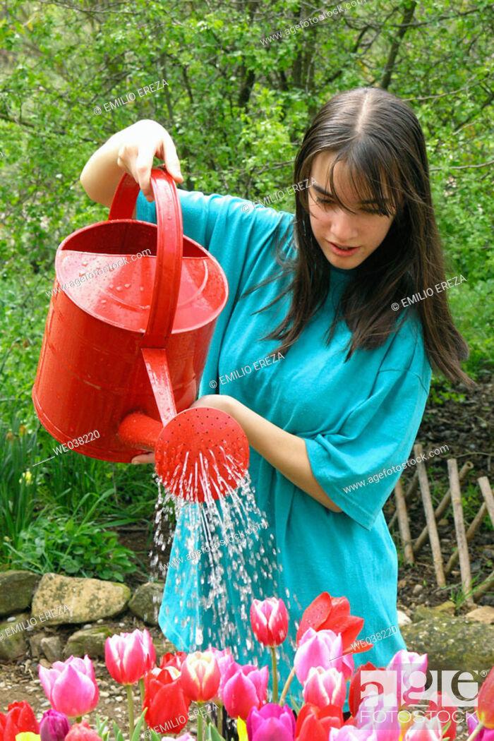Stock Photo: Girl watering tulips (Tulipa hybr.).