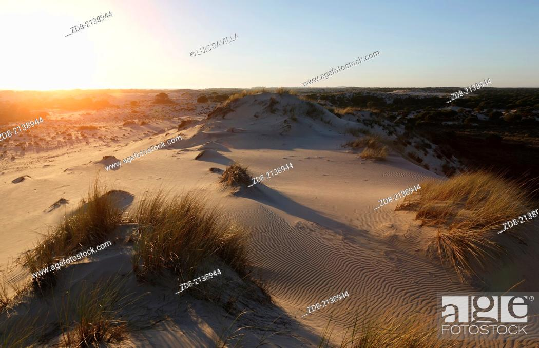 Stock Photo: dunes in doñana national park.spain.