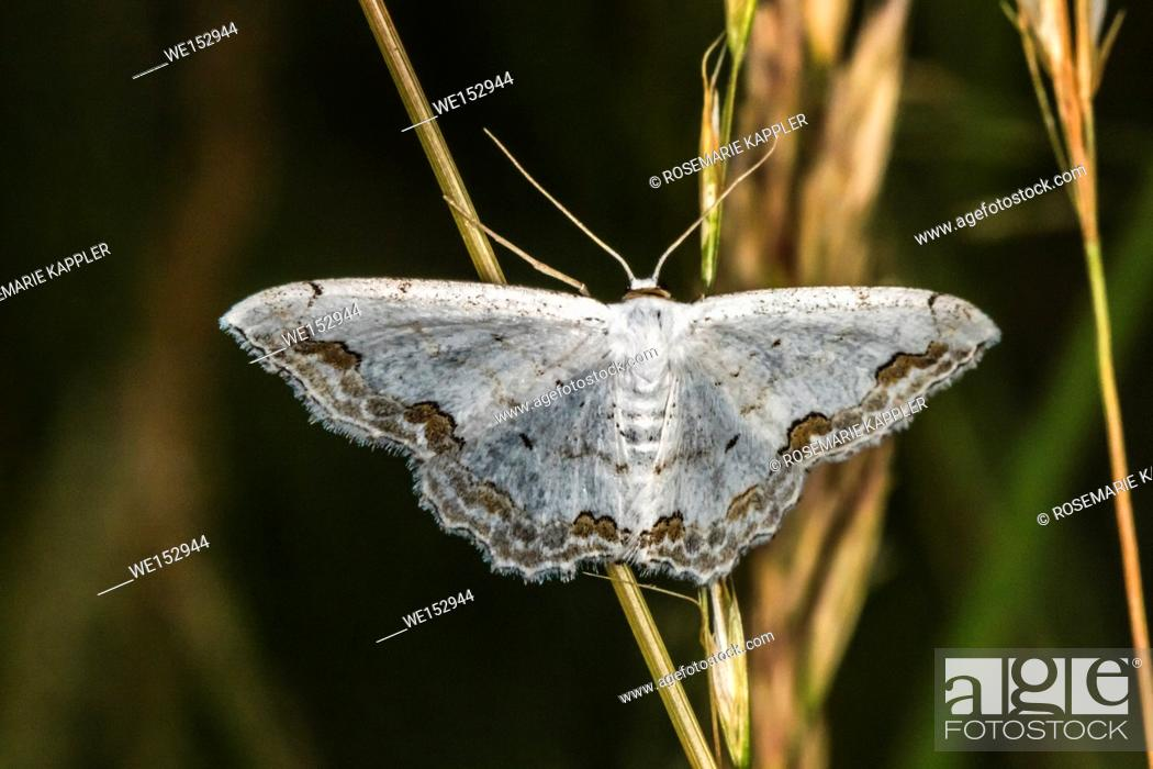 Stock Photo: A lace border is sitting on a grass-stock.