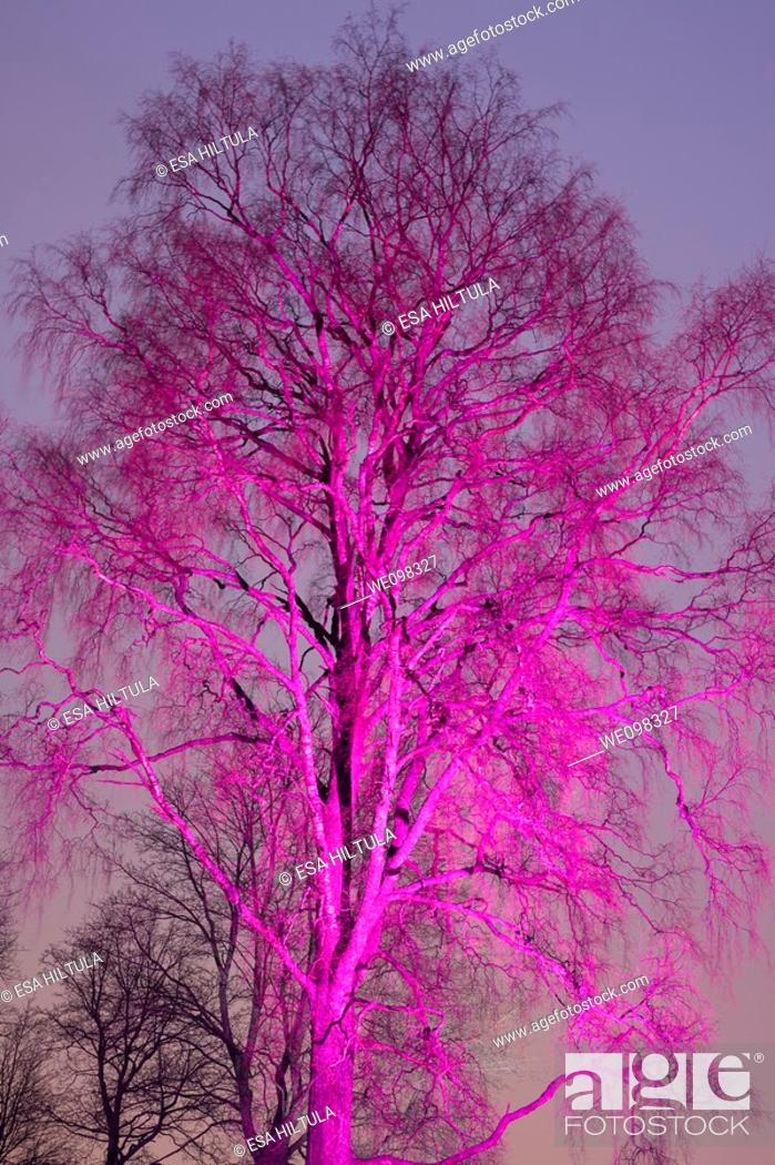 Stock Photo: tree at night colored with searchlight beam.