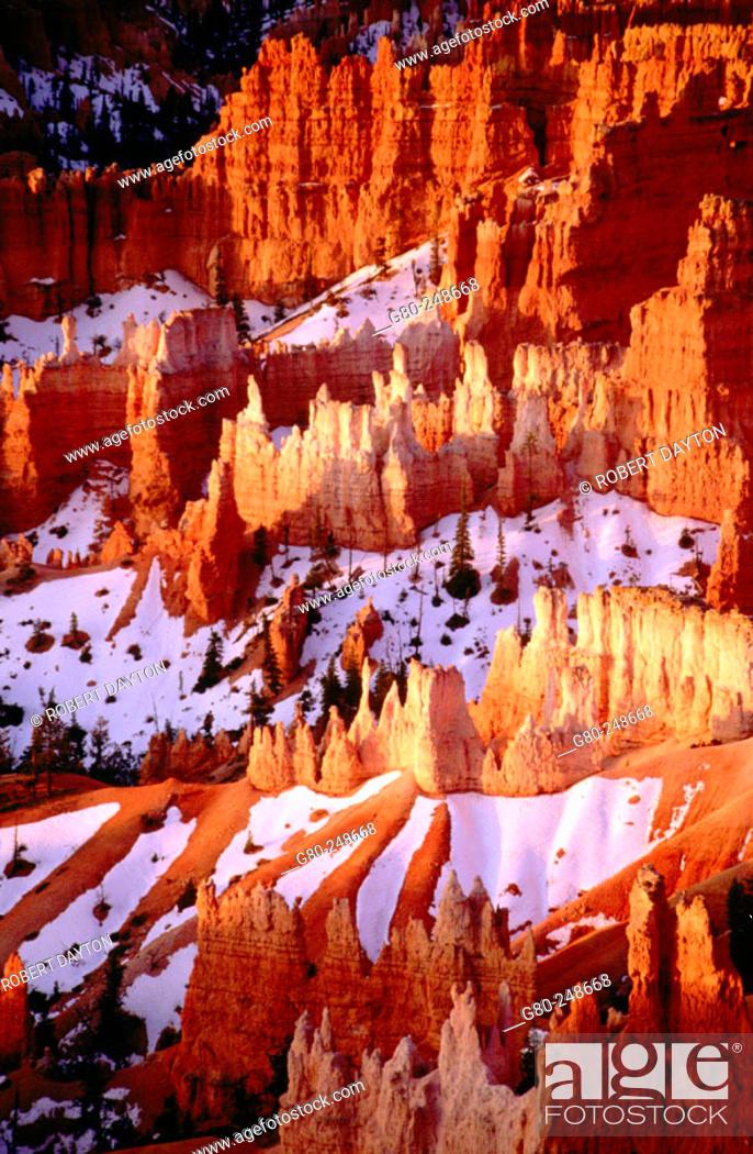 Stock Photo: Bryce Canyon National Park. Utah. USA.